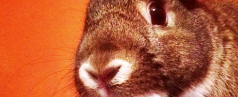 bunny close up