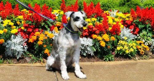 Tukker in the flower bed #NudgeThemBack #ad