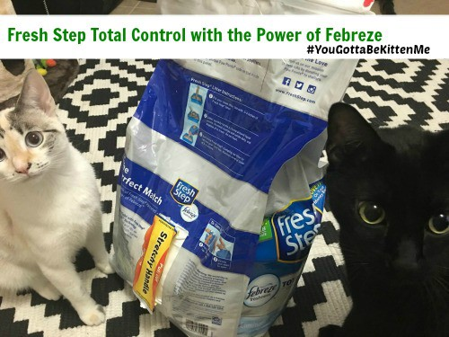 Cats with the Fresh Step Total Control with the Power of Febreze bag #YouGottaBeKittenMe #ad