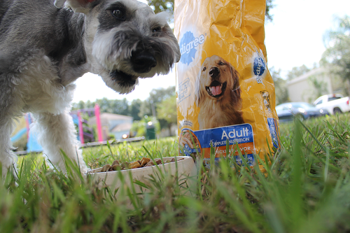 PEDIGREE Pet Month at Helicopter Mom and Just Plane Dad #PedigreeGives #ad
