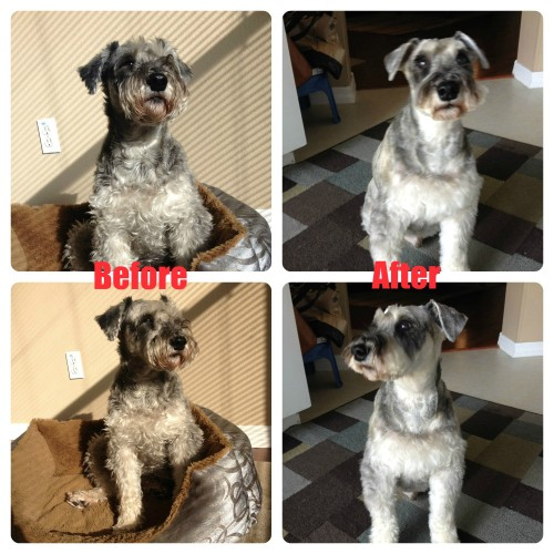 Tukker before and after grooming